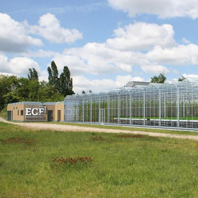 ECF Farm Berlin
